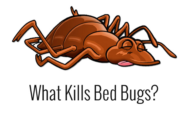 what kills bed bugs, bed bug bites, bed bug extermination, what do bed bugs look like, bed bug bites
